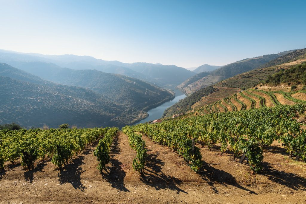 Red Wines from Portugal: A Beginner's Guide